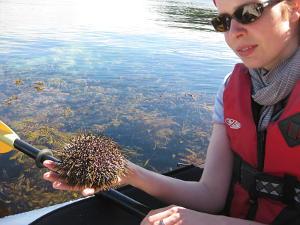 Amazing marine life - Kina sea urchin