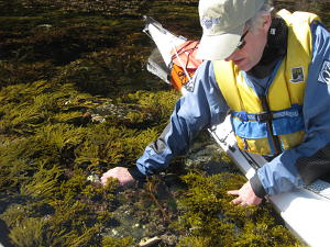 Huge variety of seaweeds in pristine waters