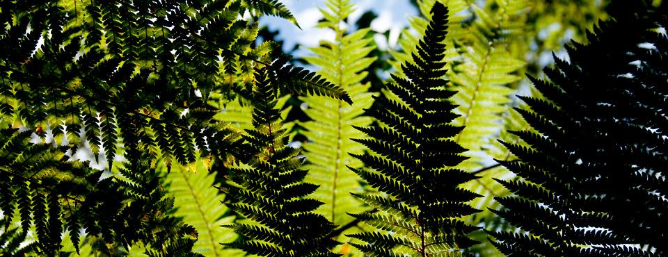 Enjoy New Zealand nature